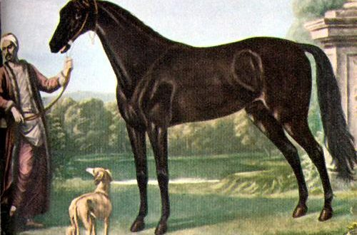 picture of Byerley Turk