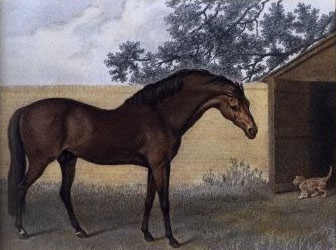 The Godolphin Arabian by George Stubbs